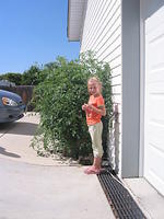 And again, Carrie and the huge tomato plant.